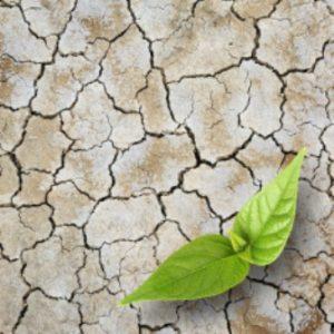 agrorestaurador de suelos