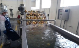 area de procesos Agrocom.co